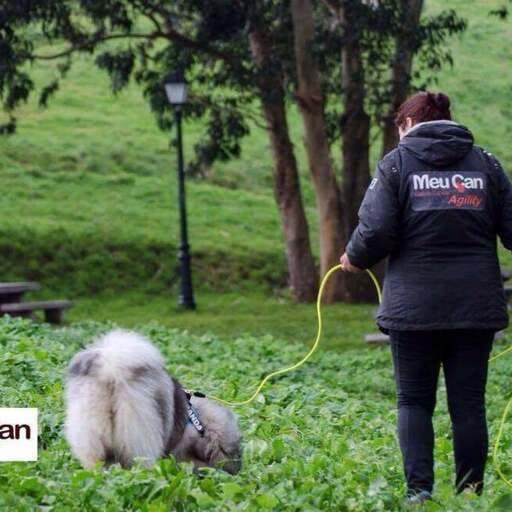 Estimulando la educación y habilidades caninas - Lorena Terrón - Entrenadora Canina en A Coruña