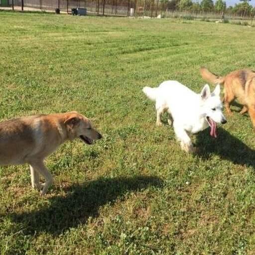 La residencia canina que tu mejor amigo merece durante tu ausencia - Más que una residencia canina, conoce la labor de Raquel