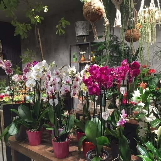 El mejor arte floral para tus fechas señaladas - César Núñez Cia, florista en Pamplona.