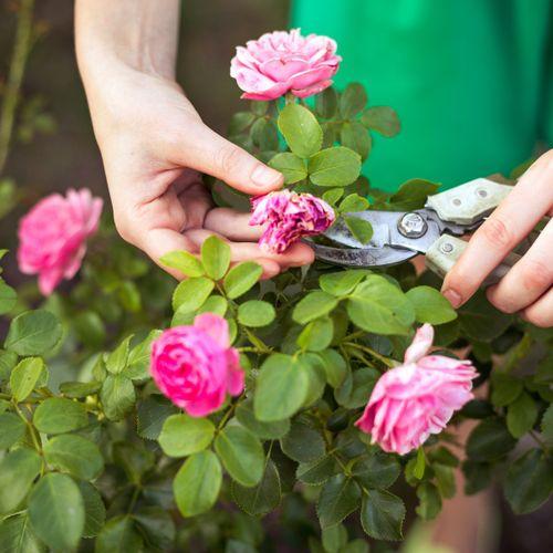Cuidado de jardines y césped